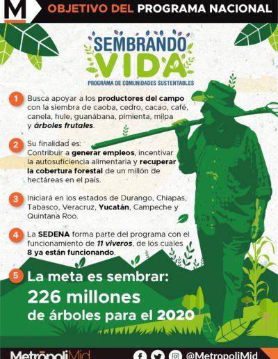 24-B INFOGRAFÍA SEMBRANDO VIDAS