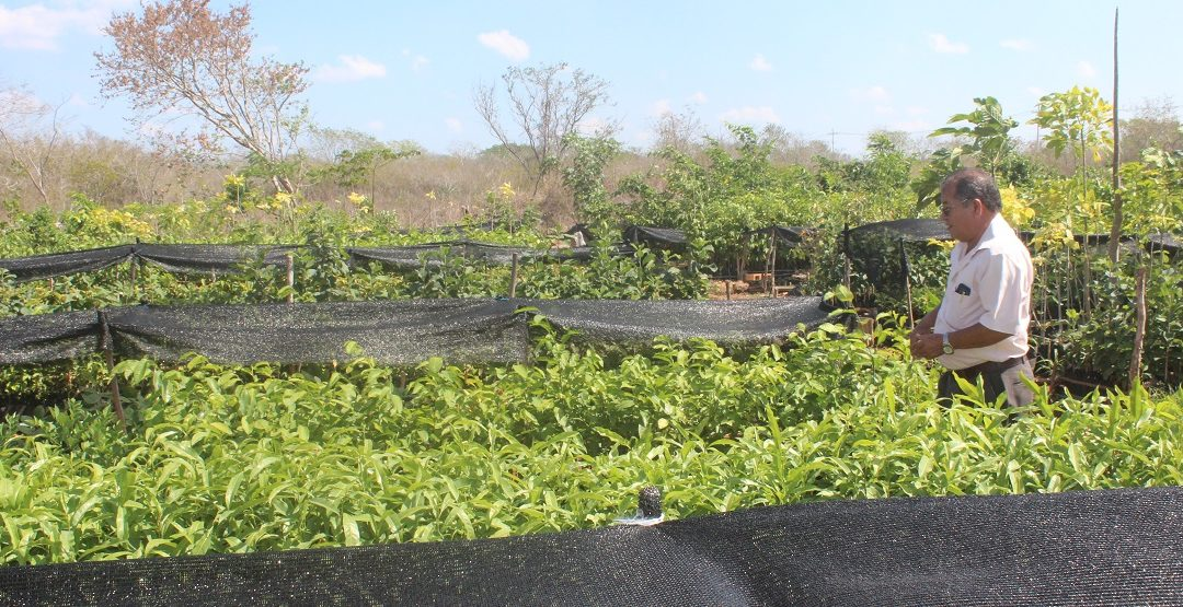 Sin pretexto para reforestar Mérida