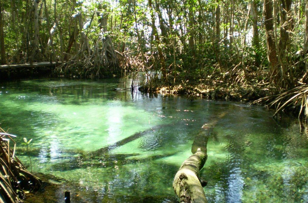 Cuidemos el agua en Yucatán. Situación actual y acciones a emprender