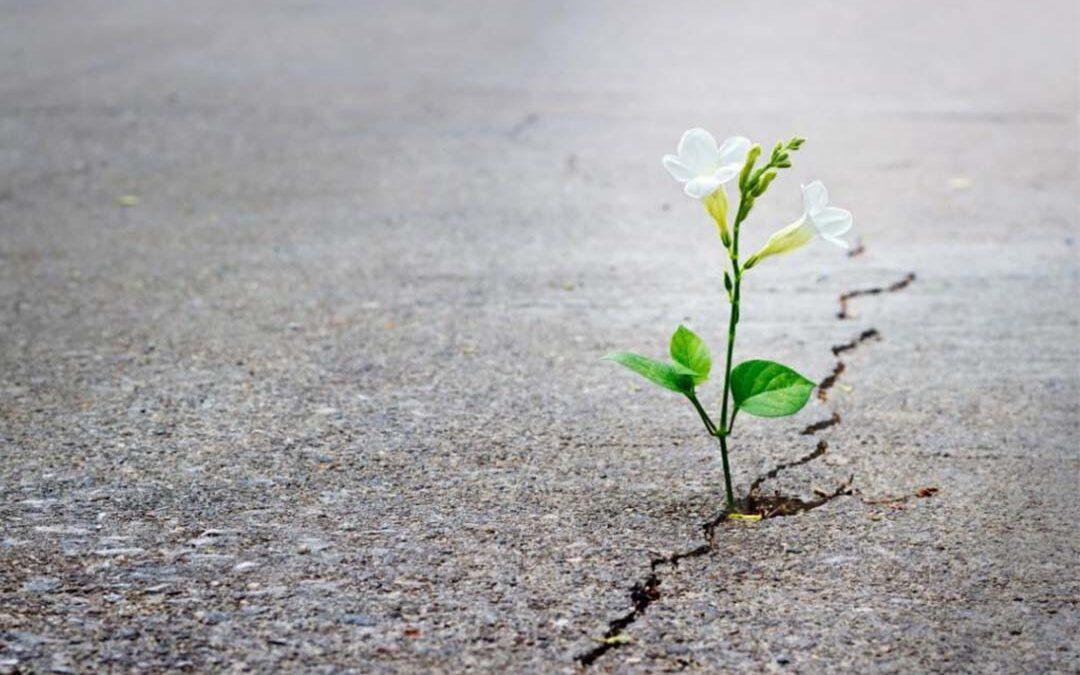 ¿Por qué es importante la resiliencia?