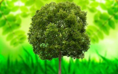 El árbol, la nueva moneda de la eficiencia energética
